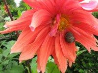 Голландские цветы