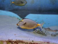 рыбка из океанариума