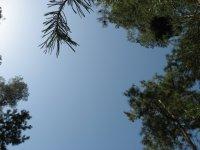 Лесное казахстанское небо