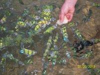 Коралловые рыбки, которых приятно кормить