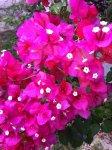 Тропические цветы