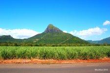 Зелены остров. Сахарный тростник и гора