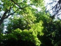 Переливы зеленого