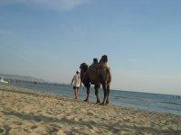 Хочешь купайся, хочешь загорай, хочешь на верблюде катайся