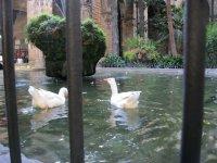 Гуси во внутреннем дворике