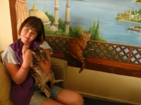 Котики нарисованные на стене отеля и живые