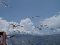 Кормление альбатросов с корабля