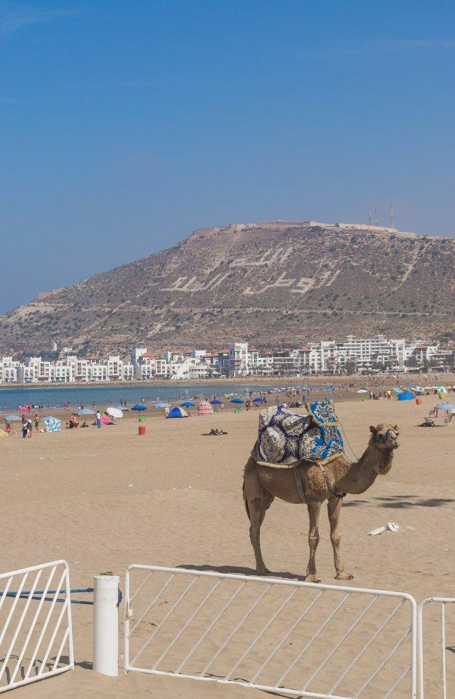 что скажут отдых в марокко отзывы туристов и фото составных модулей
