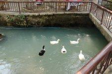 Мини-пруд с утками рядом с водопадом