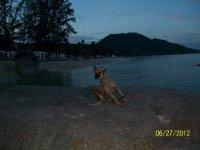 мы познакомились с этой собакой на пляже