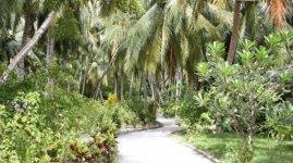 Дорожки в центре острова