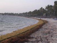 Пляж утром, водоросли не успели убрать