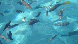 Рыбки в море