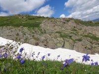 Альпийские луга в районе горы Красной