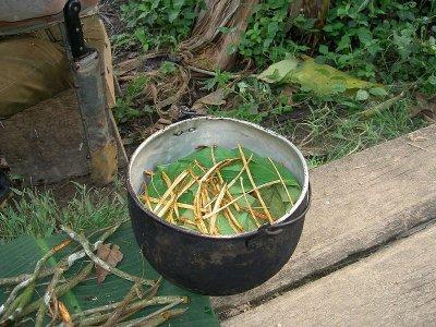 Процесс приготовления айяуаски. Источник: Wikimedia Commons, автор: Terpsichore