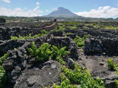 Азорский остров Пику: поход за энергией