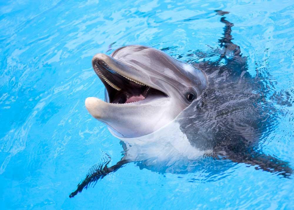 Дельфинарий Хургады — в гостях у дельфинов!