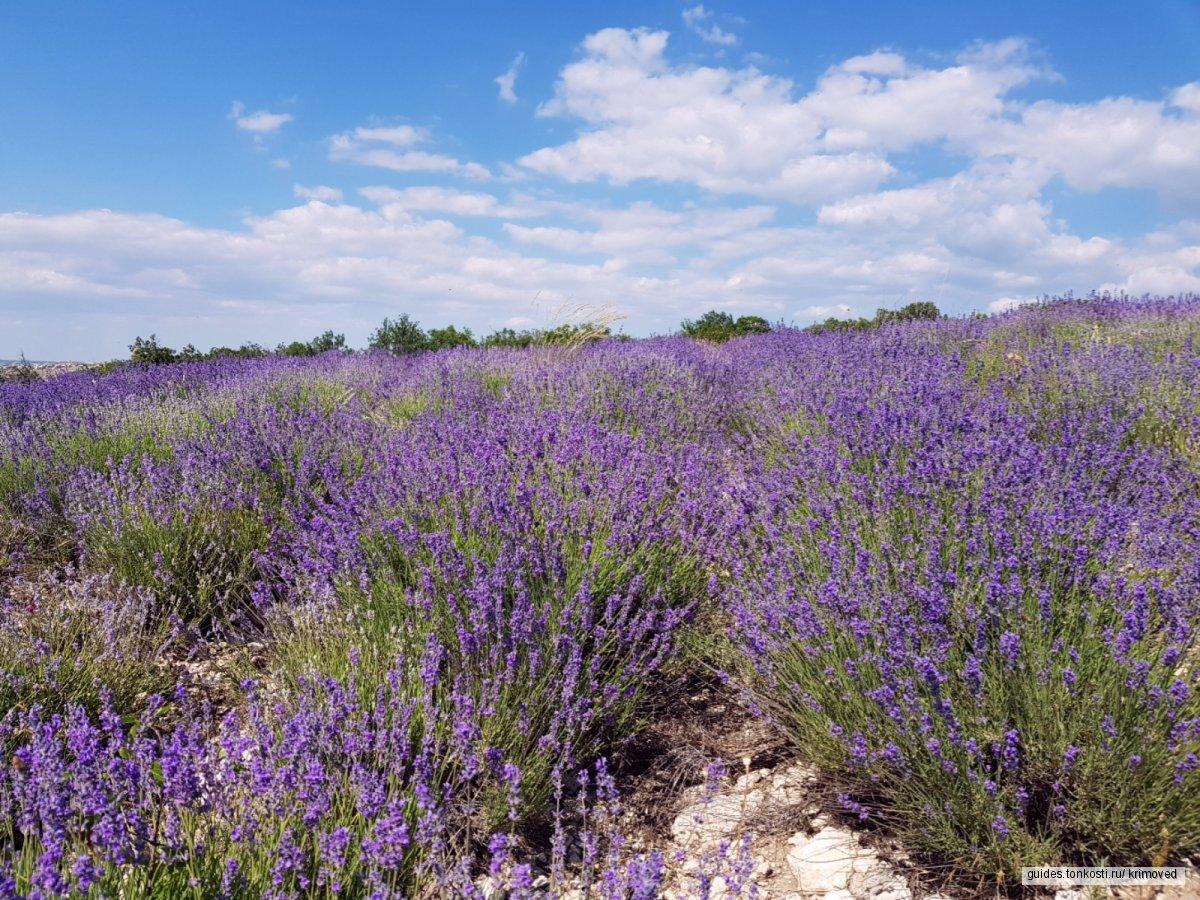 Экскурсия в цветущие поля