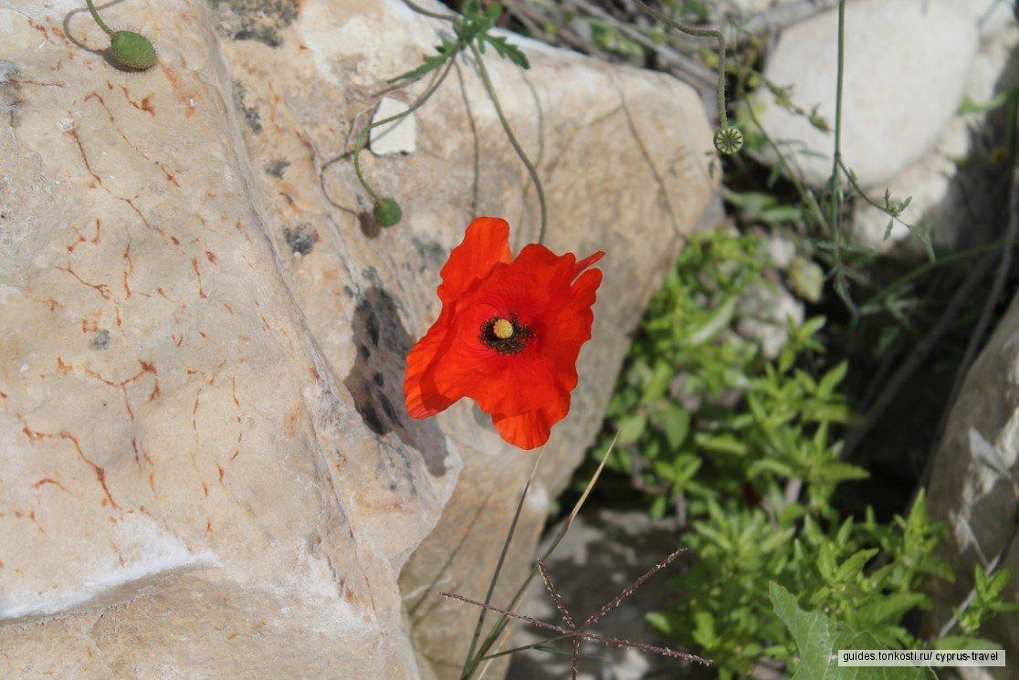 Пафос — природная жемчужина (индивидуально)