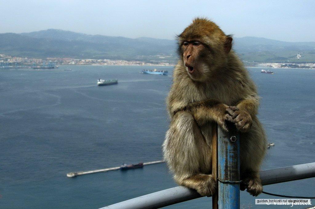 Экскурсия в Гибралтар с побережья Коста-дель-Соль