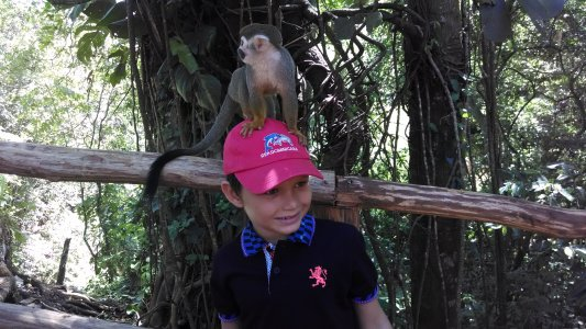 Monkey Jungle and Zip Line Adventures