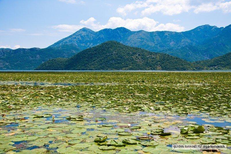 Скадарское озеро,Река Црноевича,Водопад Ниагара