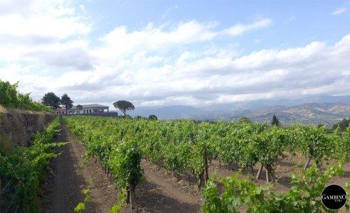 Винно-гастрономическое путешествие: винодельческое хозяйство