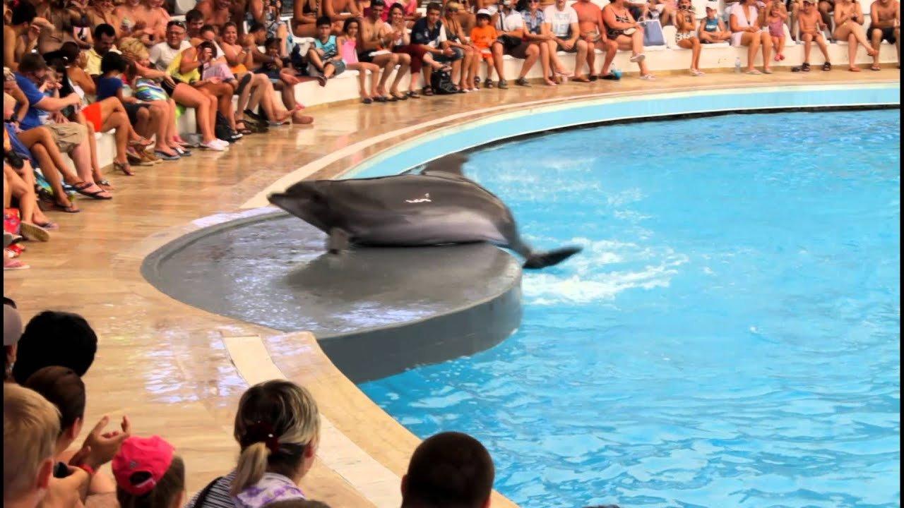 Шоу дельфинов из Анталии — Белека