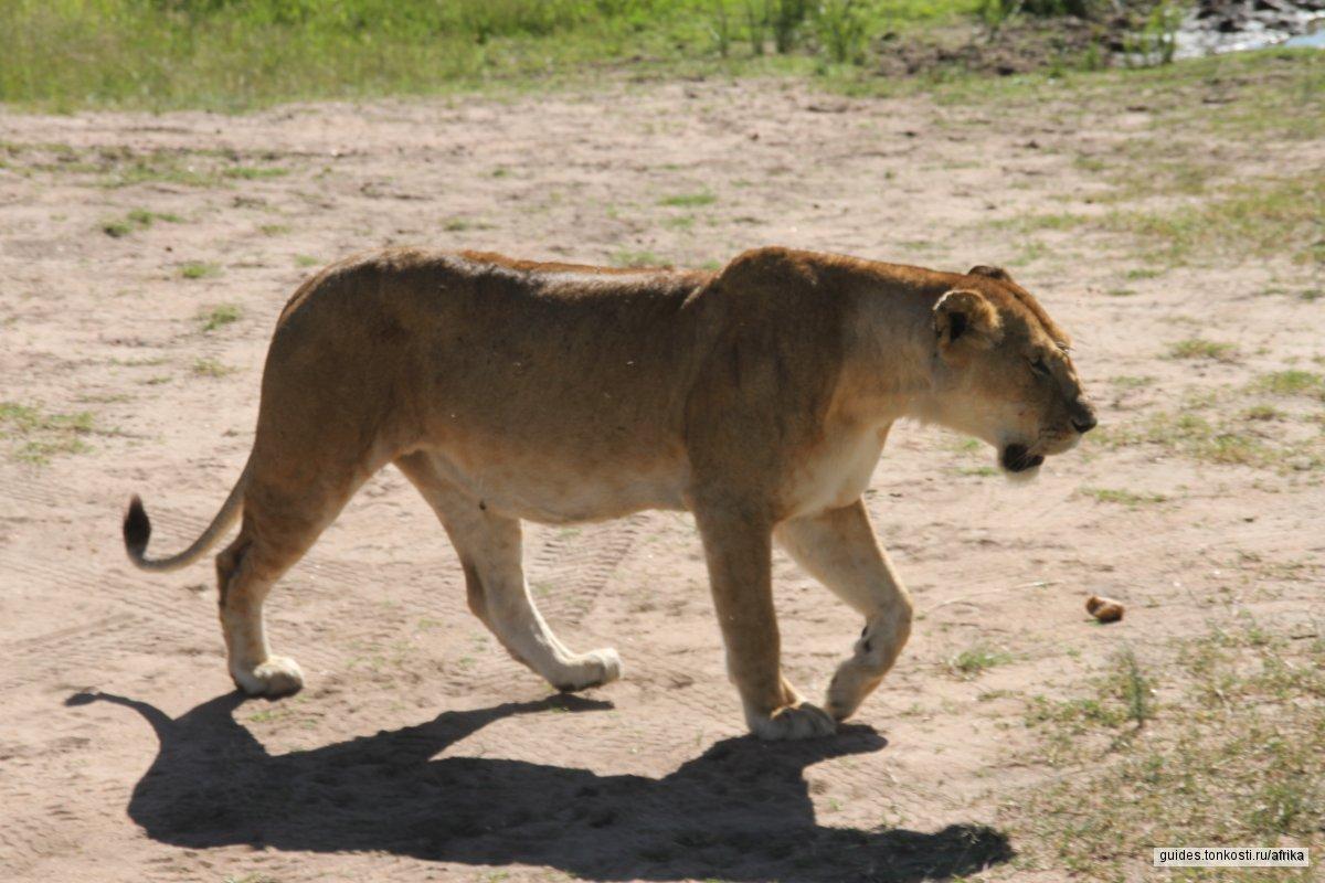 """Сафари из Найроби в Момбасу  """"сафари плюс океан"""""""