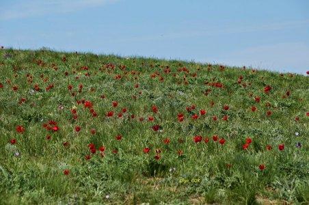 Чарующая краса дикой степи и буддийский город на юге России