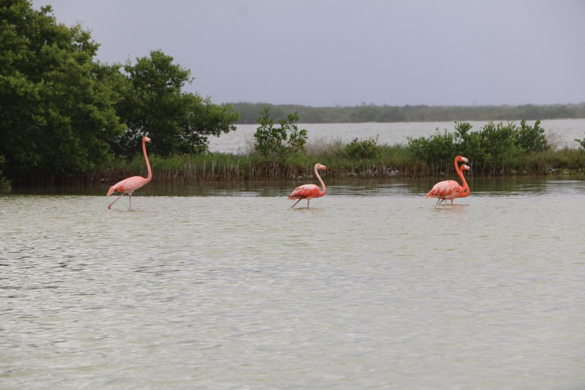Розовые озера, Рио Лагартос и два сенота