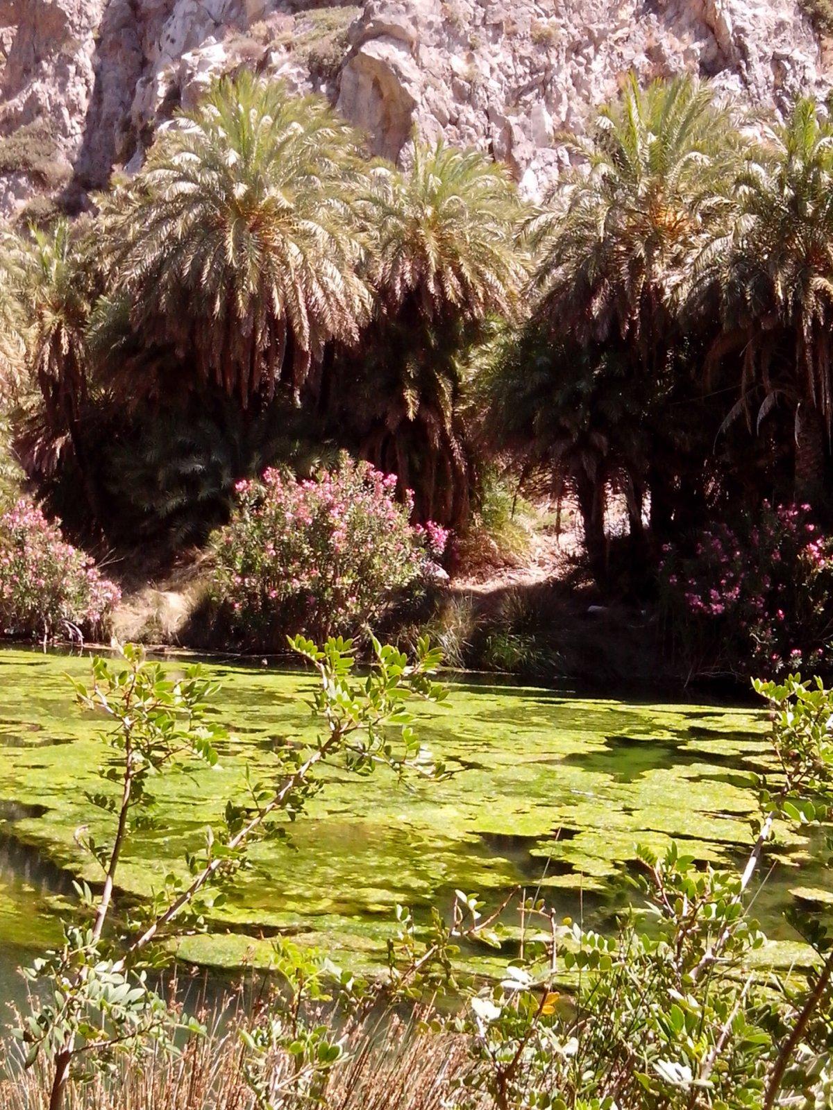 Монастырь Превели — Пальмовая роща — пляж Превели — Матала — Спили