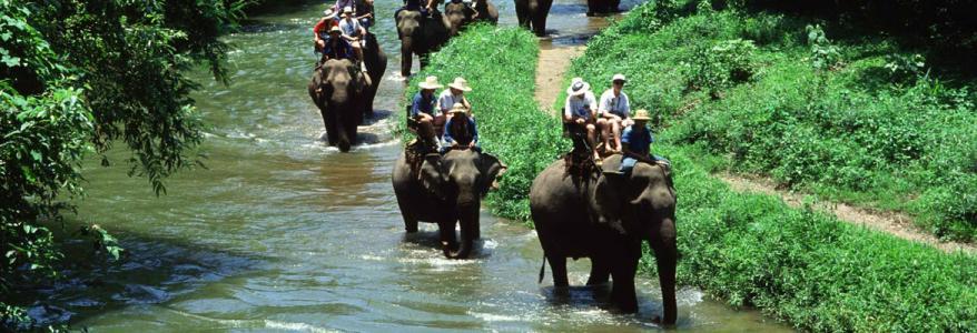 2 в 1: рафтинг и сафари на слонах