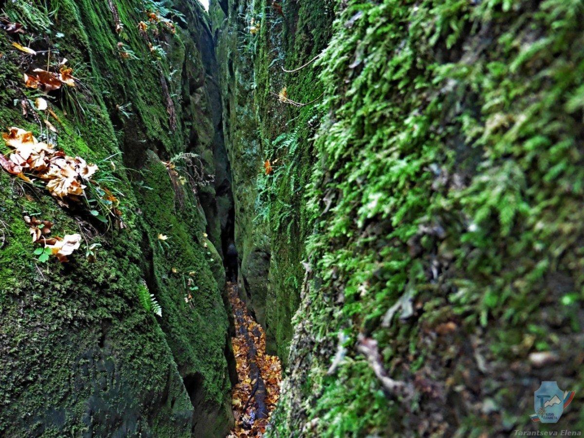 Зелёная теснина  и сидрерия «Ферма сидра»
