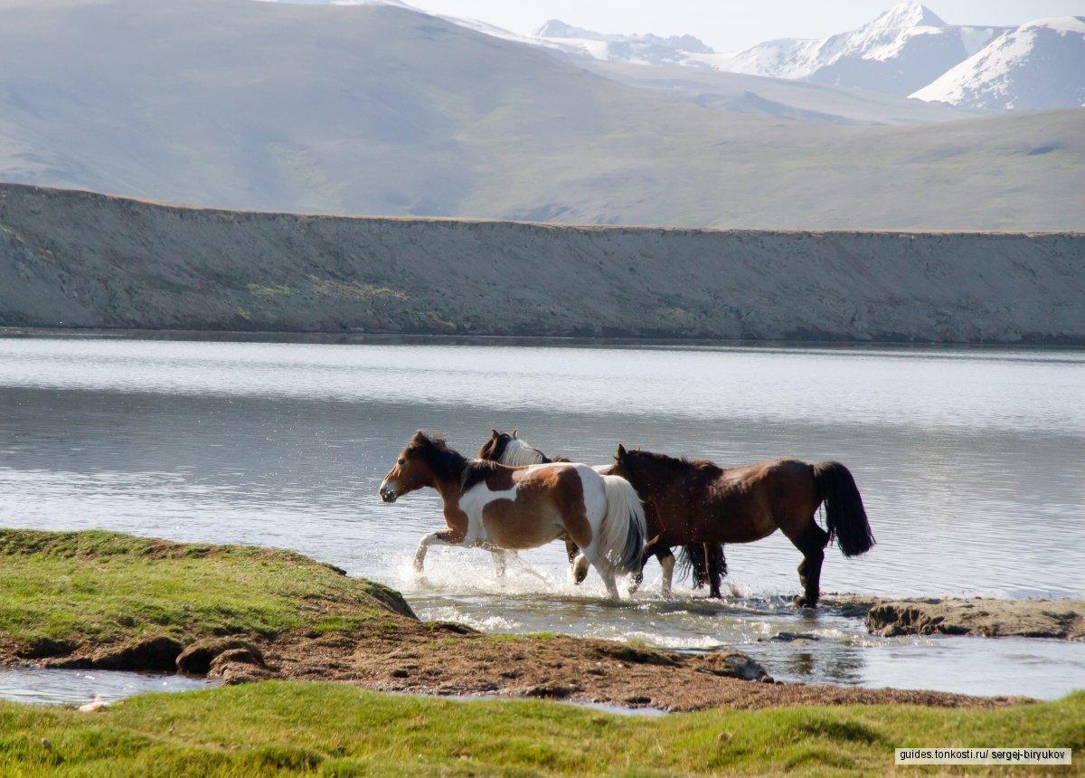 Неизведанная Монголия, 17—27 июня 2019 года