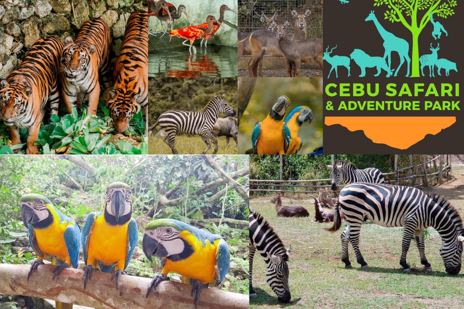 Себу: сафари Парк приключений