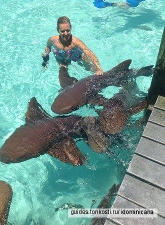 Купание с акулами и скатами в Доминикане — 55 USD