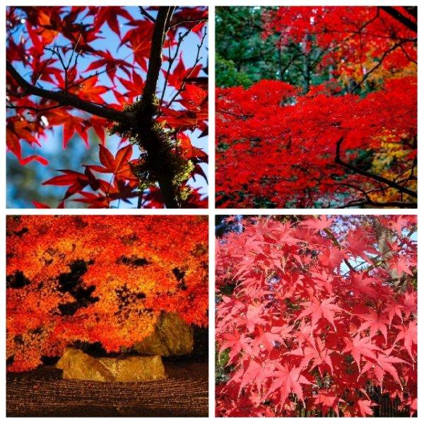 Краски осени в Киото