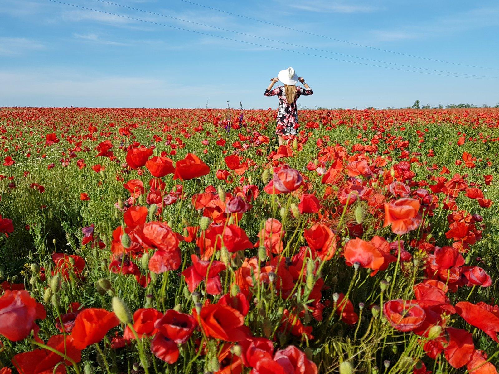 Фототур по Крыму. Лучшие видовые точки и цветущие поля