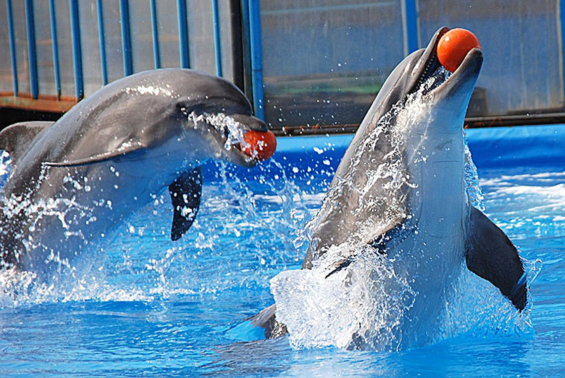 Дельфинарий на Пхукете