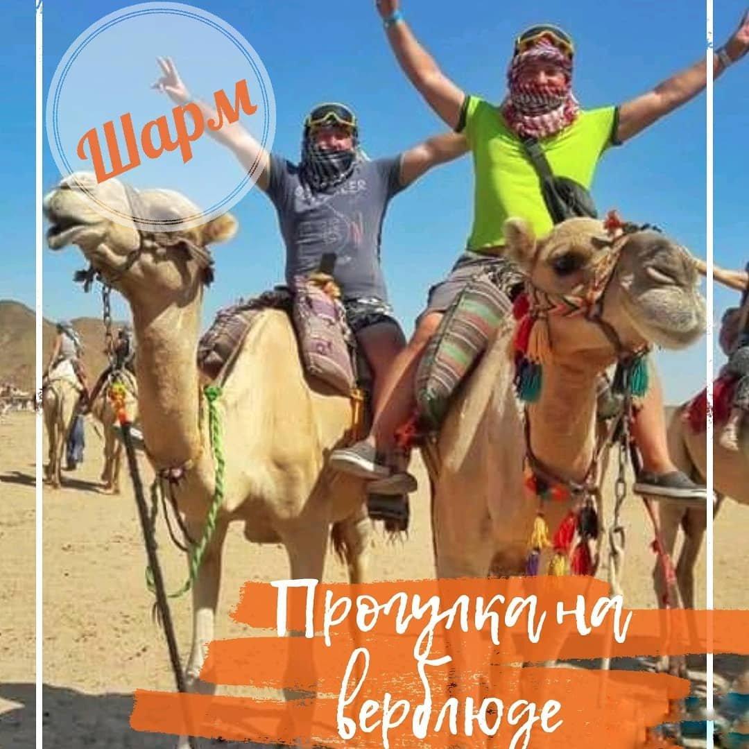 Прогулка на верблюдеиз Шарм-эль-Шейха