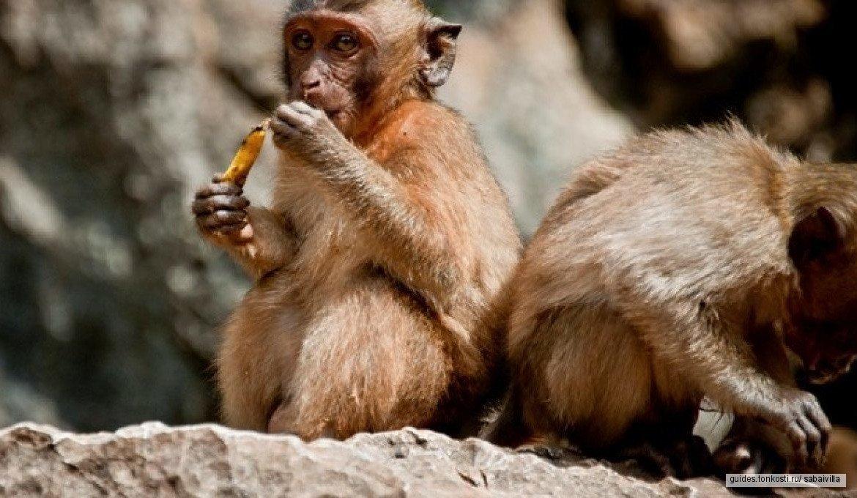 Национальный парк Као-Сок Люкс