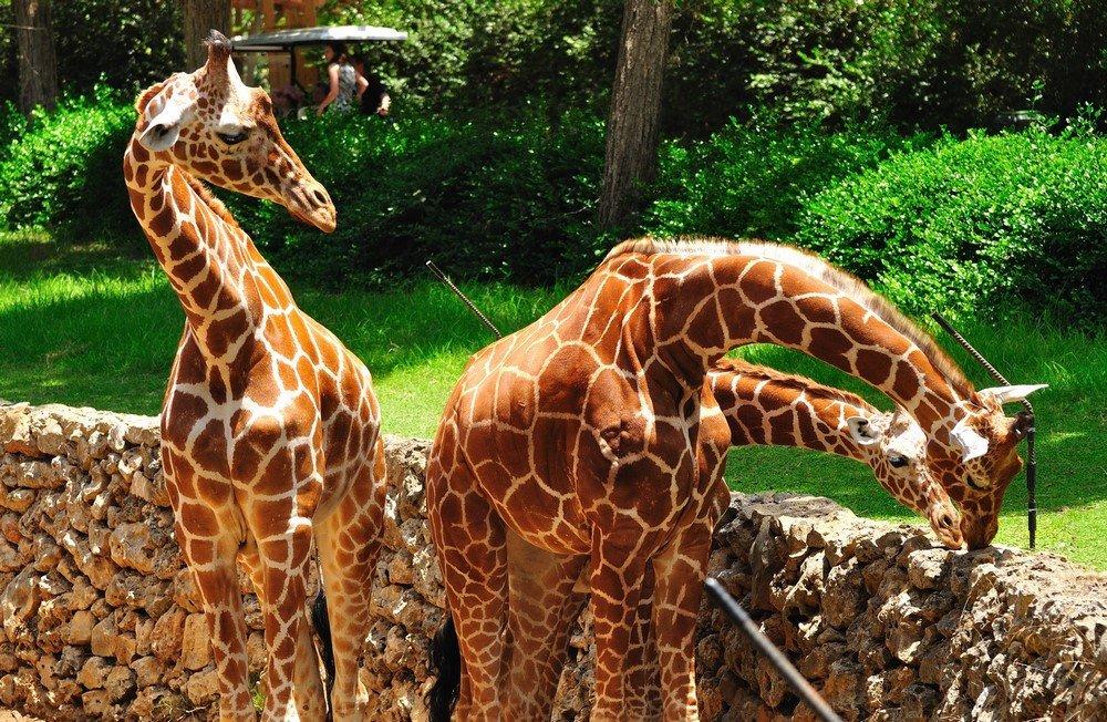 Индивидуальная экскурсия VIP class. Зоологический парк Сафари