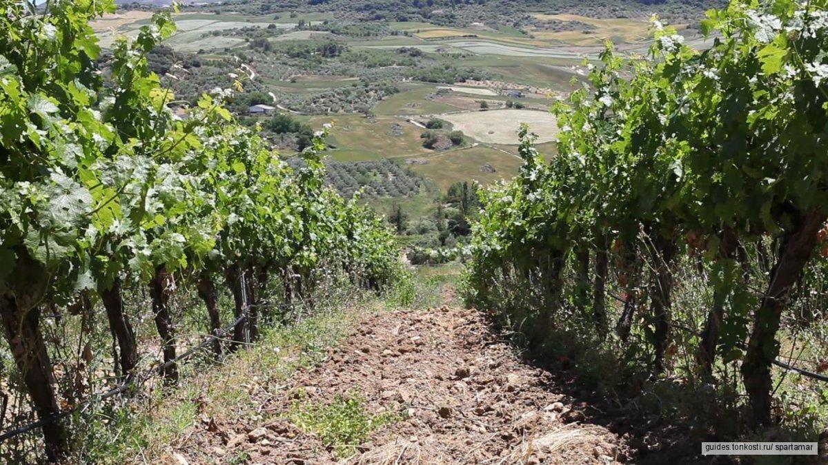 Ронда и Вино