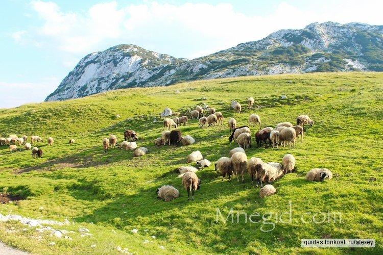 Винный и гастрономический тур по деревням Черногории