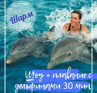 Шоу и плавание с дельфинами (30 мин) в Шарм-эль-Шейхе