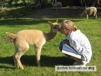Посещение ферм, или Сельская Суоми!