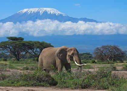 Природа Кении, 20 июля - 2 августа 2021