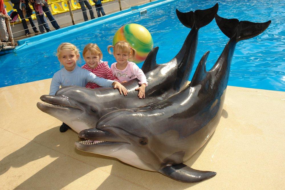 Дельфинарий на Пхукете. Сезон 2019-2020