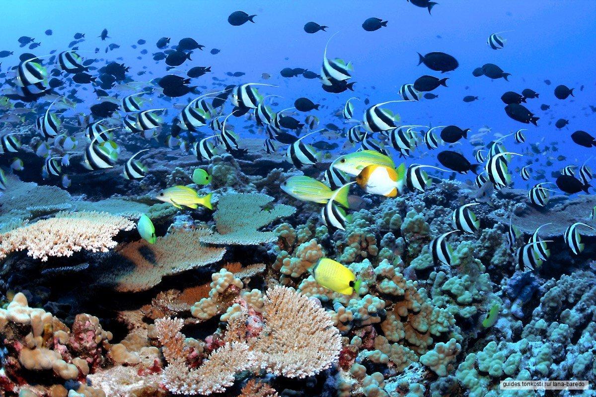 Морской Круиз по трем островам — снорклинг